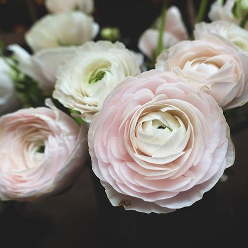 Camellia_Funeral_Flower_Arangements.jpg