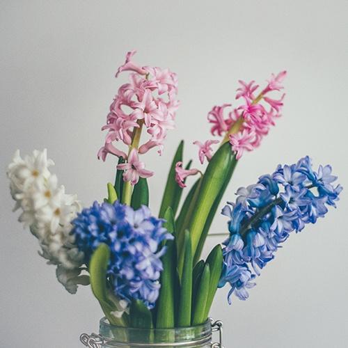 Hyacinth_Funeral_Flower_Arrangements.jpg