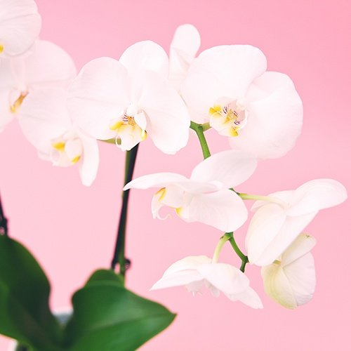 Orchid_Funeral_Flower_Arrangments.jpg