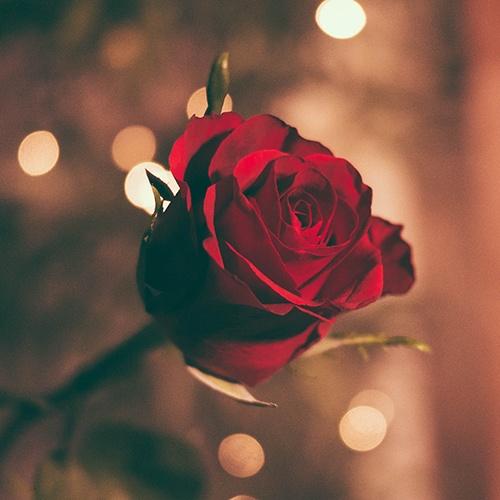 Red_Rose_Funeral_Flower_Arrangements.jpg